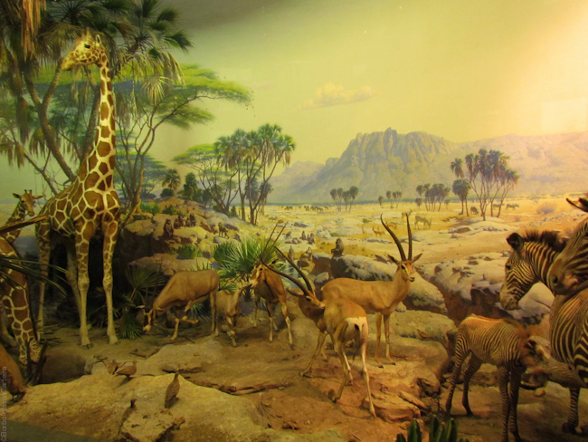 new york 2011 museum of natural history-2